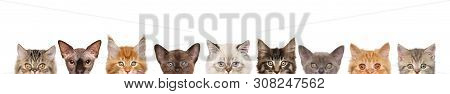 Cats, Half Of Muzzle Isolated On White Background