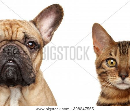 Cat And Dog Half Face, Isolated On White Background