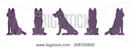 Black dog sitting. Medium size compact pet, family companion for active fun, home guarding, farm security, cute agile breed. Vector flat style cartoon illustration, white background, different views poster