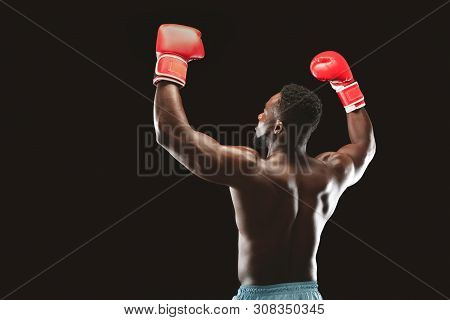 Boxing Champion. African Boxer Enjoying Win, Raising Hands In Boxing Gloves, Black Background, Back