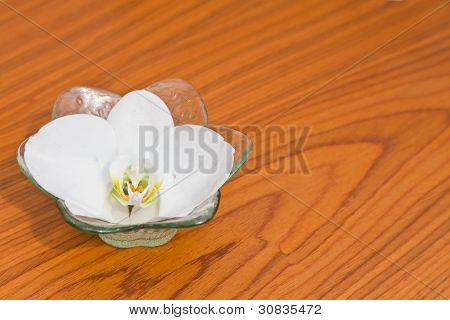 The Phalaenopsis In A Bowl