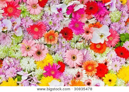 The Colorful Flowers