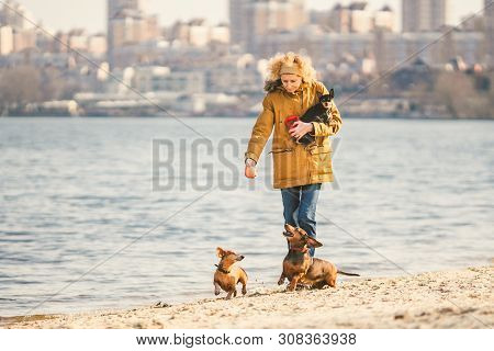 Woman Plays With Dogs. Pets And Dogs Training And Educating Dogs. Companion Pets Concept. Companion