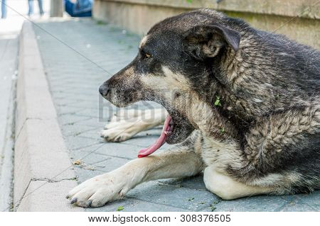 Profile Of A Stray Dog Lying On The Pavement.