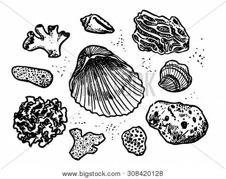 Corals And Cockleshells Hand Drawn Pen And Ink Doodle Vector Illustration. Beach Combing, Tropical R