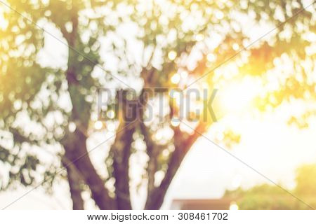 Blurred Yellow Light From Under Tree In Sunset, Abstract Bokeh Nature Background