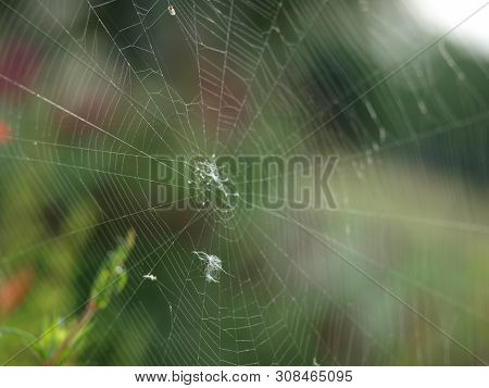 A Large Spider Web In A Butterfly Garden. The Web Was Nearly 5 Feet Long And 4 Feet In Height.