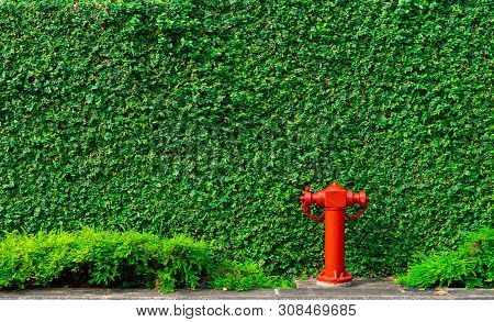 Fire Safety Pump On Texture Background Of Green Leaves Of Ivy Wall In The City On Concrete Floor. De