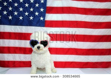 American Flag. White Dog. 4th of July celebration with a small white dog. Forth of July Celebration concepts.