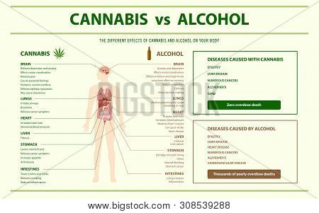 Cannabis Vs Alcohol Horizontal Infographic, Healthcare And Medical Illustration About Cannabis