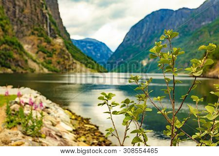 Tourism Vacation And Travel. Beautiful View On Summer Fjord Sognefjord, Gudvangen Norway Scandinavia