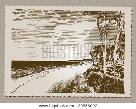 Vintage Postcard - Coastline at Baltic Sea