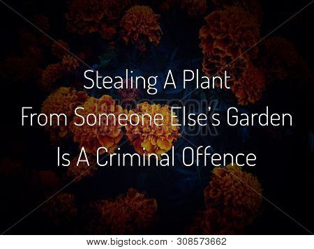 Image With Wordings Or Quotes - Steeling A Plant From Someone Else's Garden Is A Criminal Offence