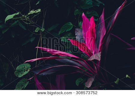 Close Up Of Tropical Plants Nature Background. Nature Background Of Tropical Plants. Tropical Plant