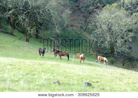 Horses Standing In Mountain Pasture