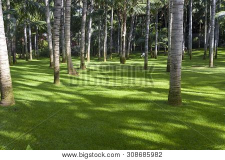 Manicured Lawn And Growing Palm Trees. Outdoor Recreation. Lora Park In Tenerife.