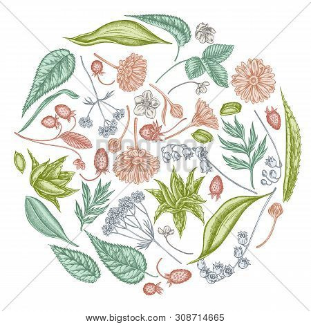 Round Floral Design With Pastel Aloe, Calendula, Lily Of The Valley, Nettle, Strawberry, Valerian St