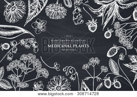 Floral Design With Chalk Aloe, Calendula, Lily Of The Valley, Nettle, Strawberry, Valerian Stock Ill