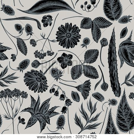 Seamless Pattern With Hand Drawn Stylized Aloe, Calendula, Lily Of The Valley, Nettle, Strawberry, V