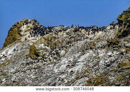 Common Black White Muures Birds Bandon Beach Oregon