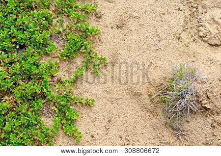 Photograph Of The North Of The Soil In The Taiga Of Yakutia Sch Green Grass And Bushes Of Berries In