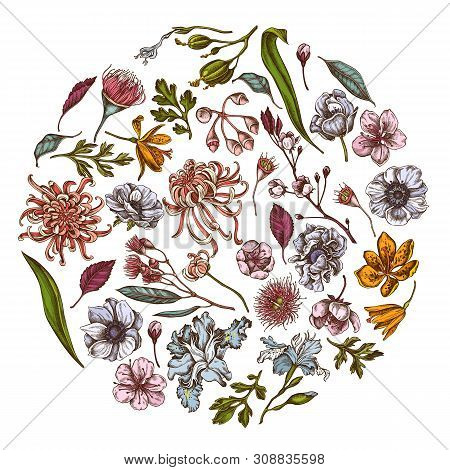 Round Floral Design With Colored Japanese Chrysanthemum, Blackberry Lily, Eucalyptus Flower, Anemone