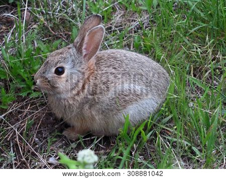 cute cuddly little fluffy furry baby bunny rabbit alone outside in a grass field, hair, animal poster