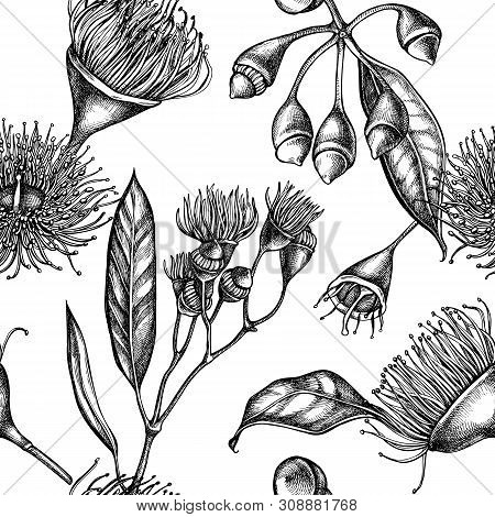 Seamless Pattern With Black And White Eucalyptus Flower Stock Illustration