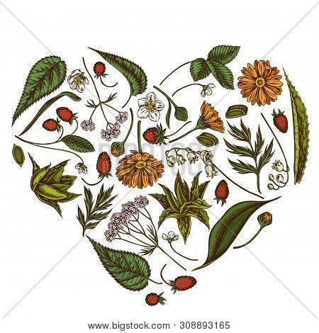 Heart Floral Design With Colored Aloe, Calendula, Lily Of The Valley, Nettle, Strawberry, Valerian S