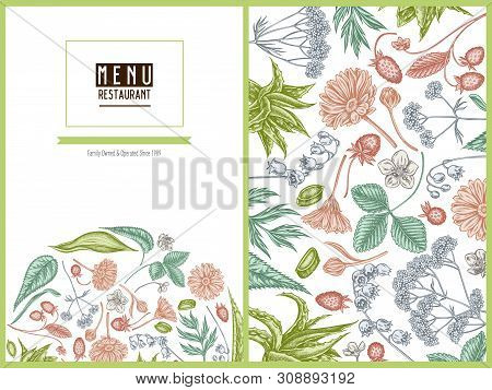 Menu Cover Floral Design With Pastel Aloe, Calendula, Lily Of The Valley, Nettle, Strawberry, Valeri