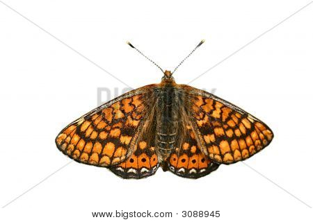 Isolated Orange Butterfly