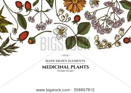 Floral Design With Colored Aloe, Calendula, Lily Of The Valley, Nettle, Strawberry, Valerian Stock I