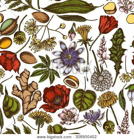 Seamless Pattern With Hand Drawn Colored Almond, Dandelion, Ginger, Poppy Flower, Passion Flower, Ti