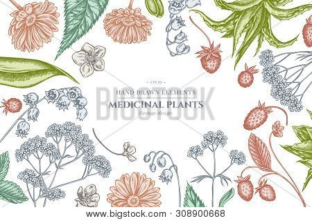 Floral Design With Pastel Aloe, Calendula, Lily Of The Valley, Nettle, Strawberry, Valerian Stock Il