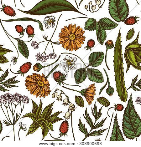 Seamless Pattern With Hand Drawn Colored Aloe, Calendula, Lily Of The Valley, Nettle, Strawberry, Va