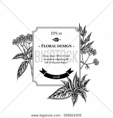 Badge Design With Black And White Aloe, Nettle, Valerian Stock Illustration