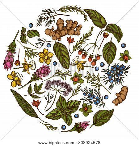 Round Floral Design With Colored Angelica, Basil, Juniper, Hypericum, Rosemary, Turmeric Stock Illus