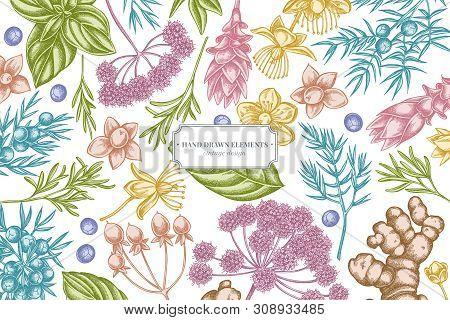 Floral Design With Pastel Angelica, Basil, Juniper, Hypericum, Rosemary Turmeric Stock Illustration