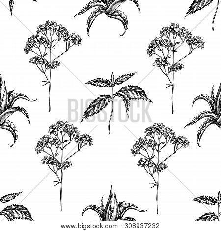 Seamless Pattern With Black And White Aloe, Nettle, Valerian Stock Illustration