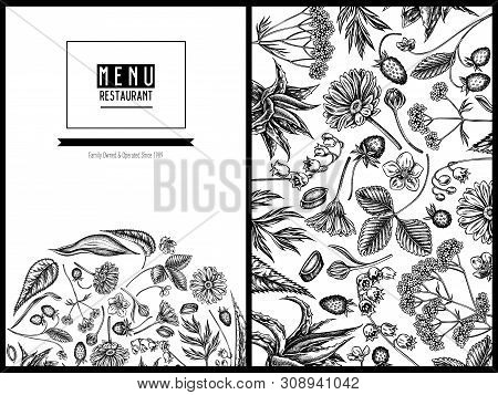 Menu Cover Floral Design With Black And White Aloe, Calendula, Lily Of The Valley, Nettle, Strawberr