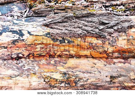 Surface Of An Old Tree Of Heterogeneous Structure, Vintage Texture, Multicolored Stains, Close-up