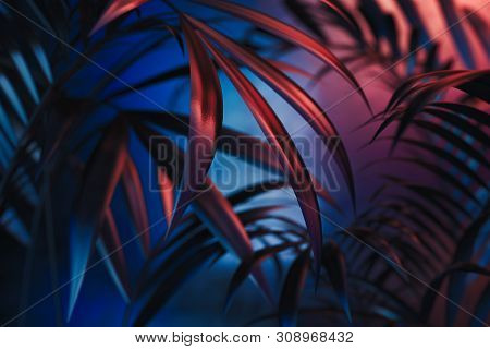 Tropical Plants On Blue And Red Neon Background. Empty Space. 3d Rendering.
