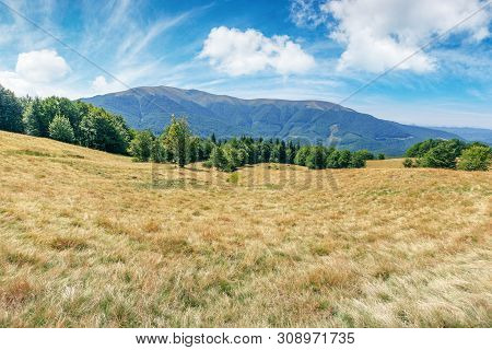 Mountain Meadow In Weathered Grass. Beautiful Landscape On A Sunny Day In Late Summer. Beech Forest