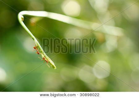Ants Walking on Plant