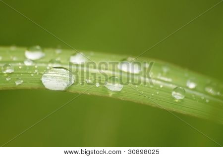 Rolling water on the leaves