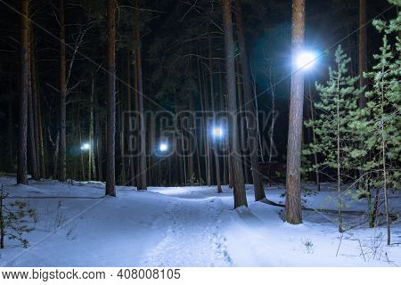 Illuminated Path In The Winter Park. A Path In A Deserted Coniferous Forest. Fabulous Road In The Wi