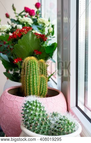 Several Cacti And Roses In Pot Stand On The Windowsill On The Balcony