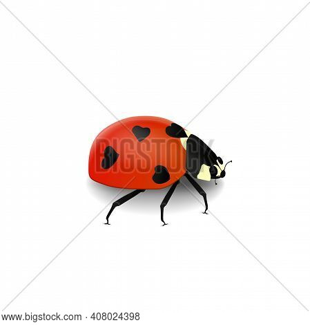 Vector Realistic Volumetric Ladybird With Black Hearts On She\'s Red Back Isolated On White Backgrou