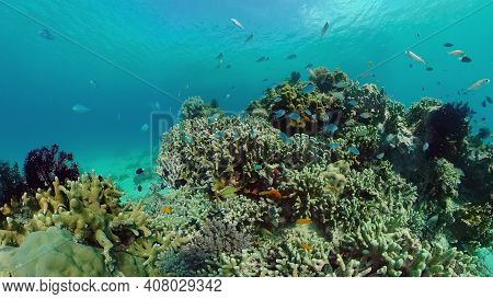 The Underwater World Of The With Colored Fish And A Coral Reef. Tropical Reef Marine. Philippines.