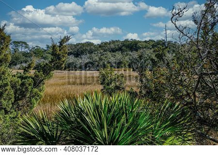 A Saltwater Wetlant Marsh Beyond Trees And Palms